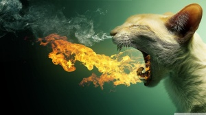 flaming_cat-wallpaper-1600x900